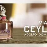 Viaje a Ceylan Mujer (Adolfo Dominguez)