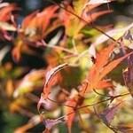 Autumn (Bud Parfums)