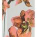 Wild Orchid (Koton)