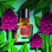 Nigritella - Oriental Orchid (The Body Shop)