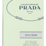 Infusion d'Iris Cèdre (Prada)