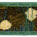 Narcisse de France (Astra)